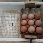 huevos sobre volteador