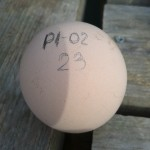 huevo identificado